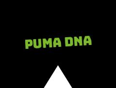 Puma DNA